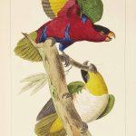 """Exposition """"Gravures d'oiseaux exotiques"""""""